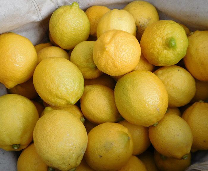 レモン出荷3101 (2)