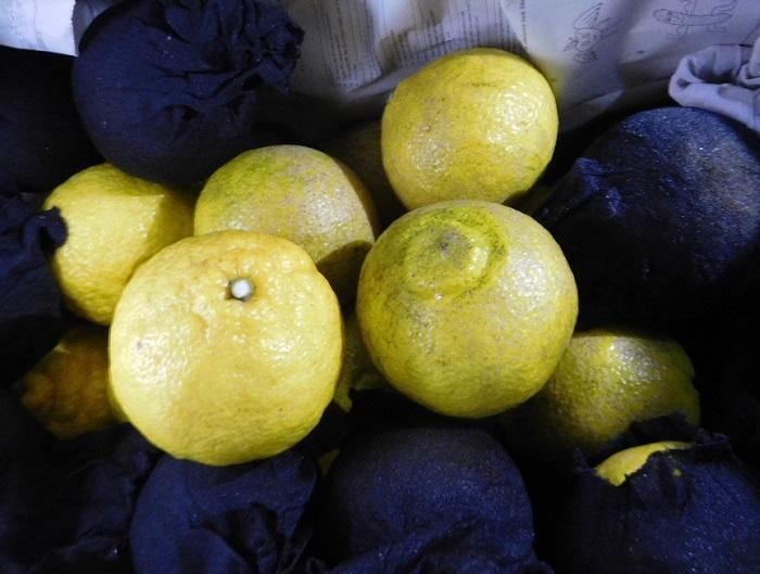 柑橘いろいろ3102 (2)