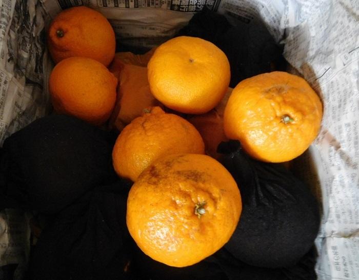 柑橘いろいろ3102 (3)