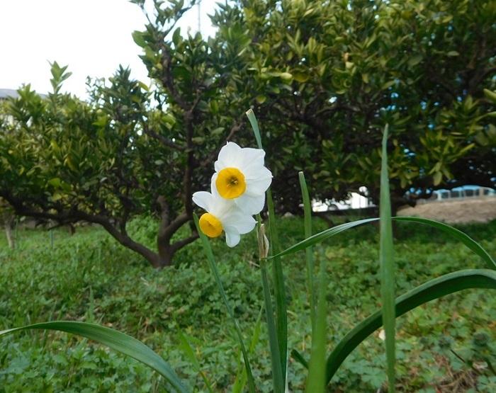 春待つ草々3102 (2)