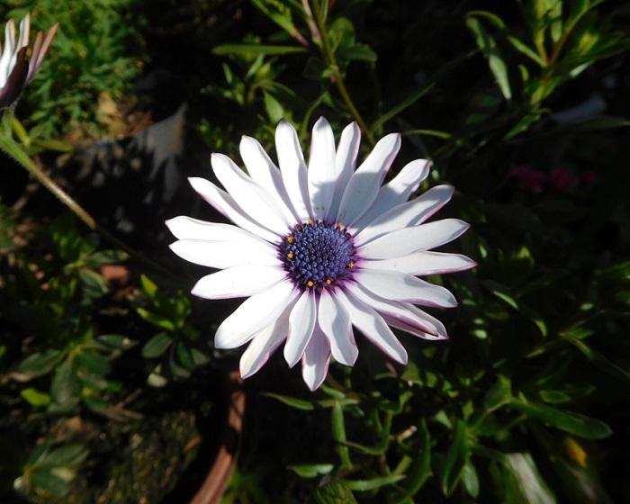 春の花3103 (2)