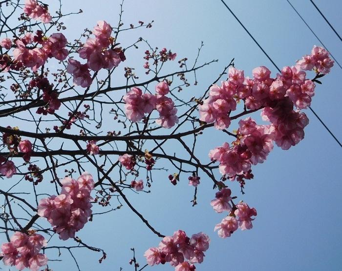 桜3103