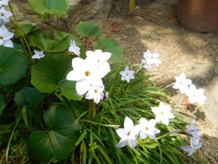 庭の花3103