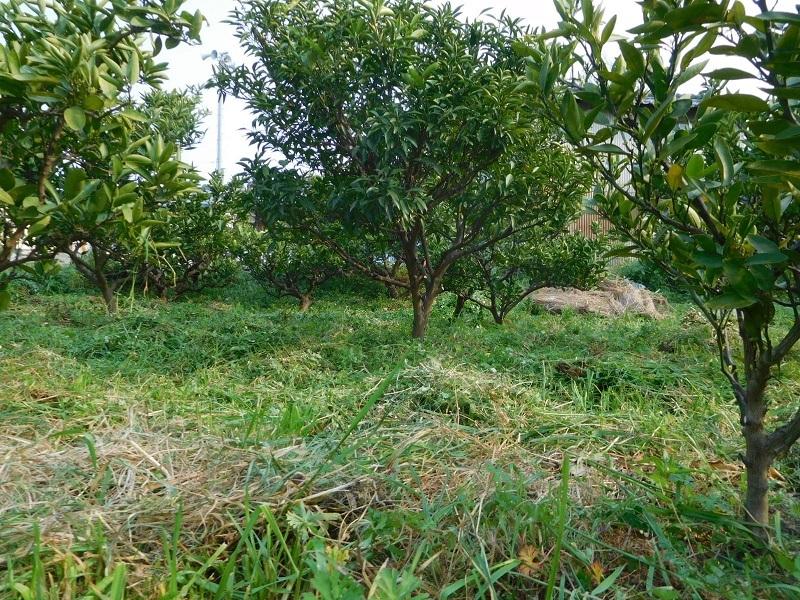 エープリル草刈3104 (1)