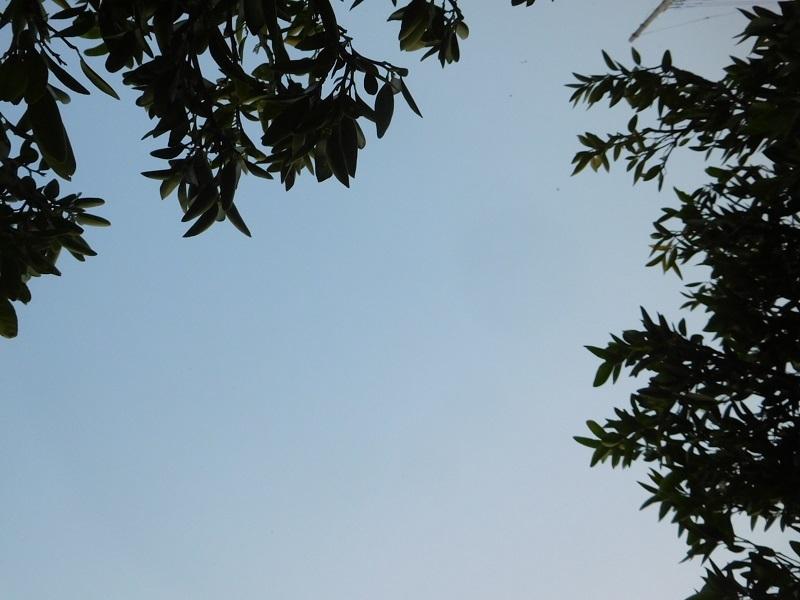 エープリル草刈3104 (2)