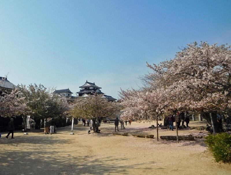 桜も散りはじめた中で3104 (1)