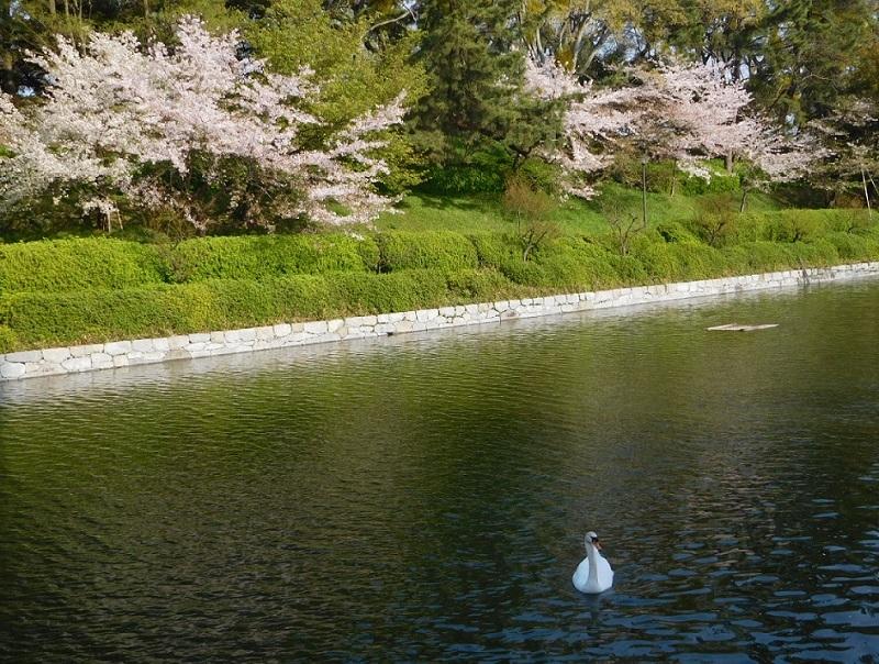 桜も散りはじめた中で3104 (3)