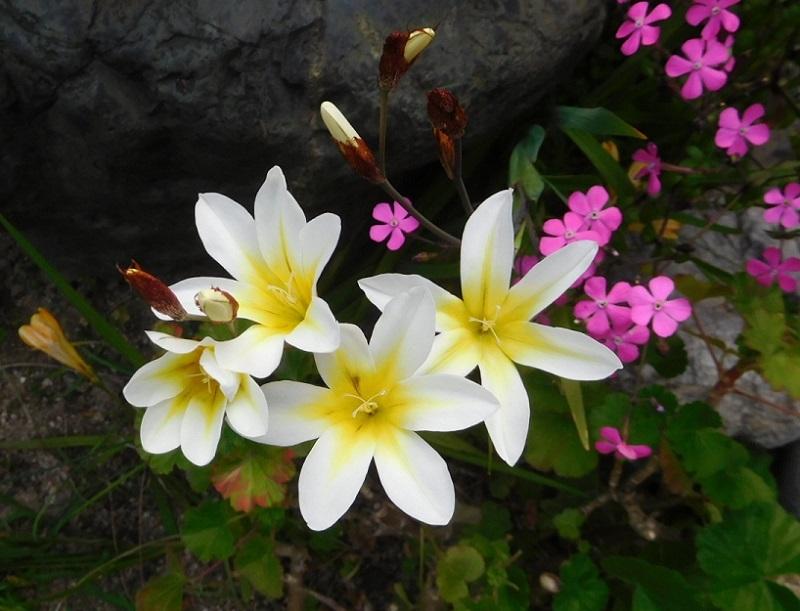 花盛り3104