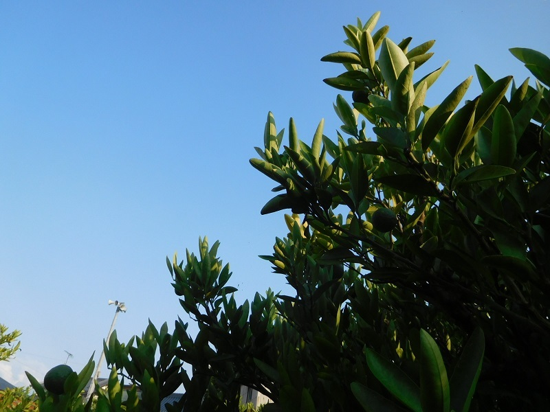 晴れ間の草刈0107 (4)