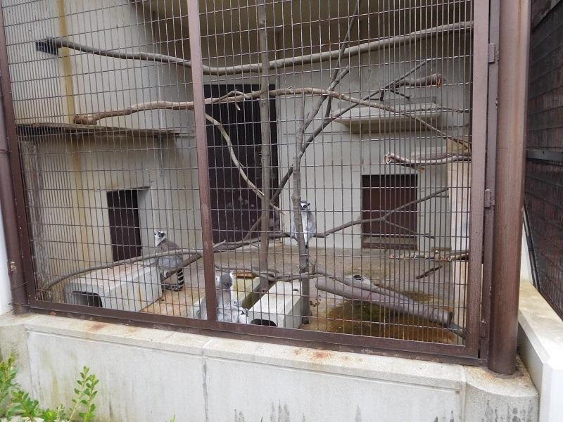 動物園011002