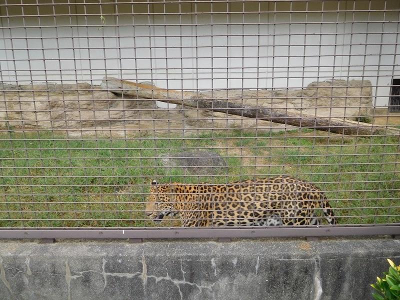 動物園011001