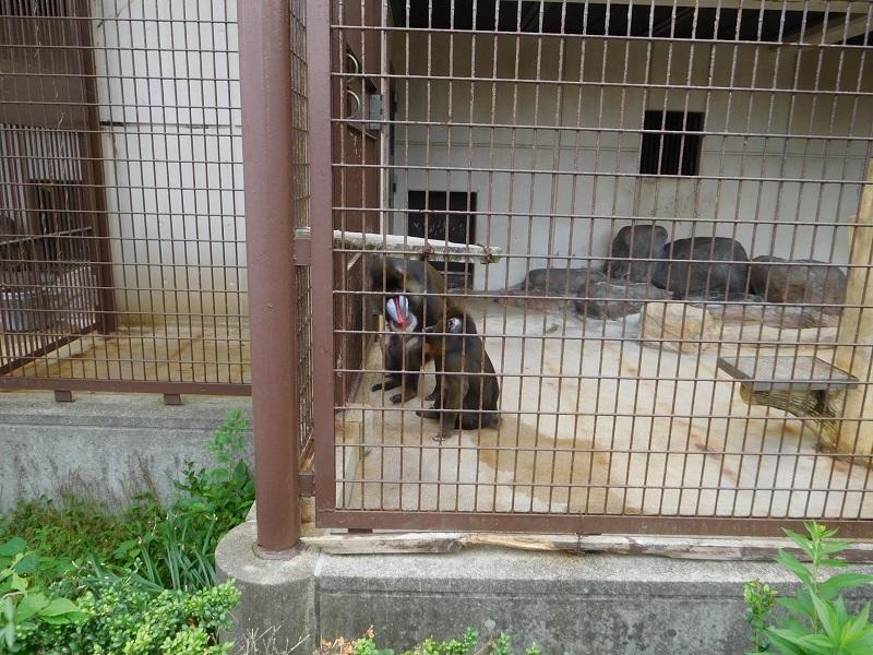 動物園011003