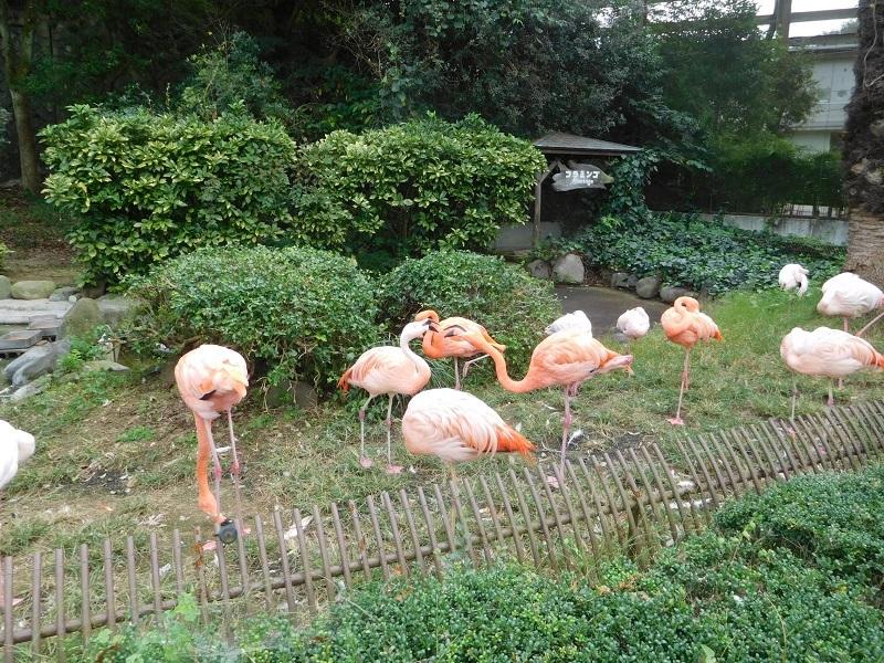 動物園011004