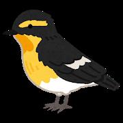 bird_kibitaki.png