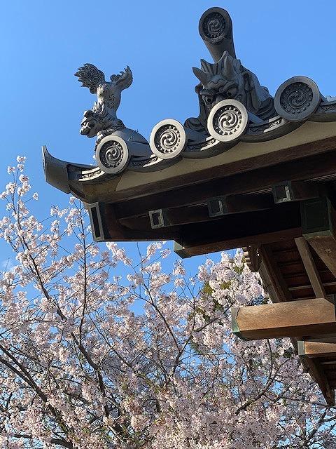 20190416桜と鬼瓦