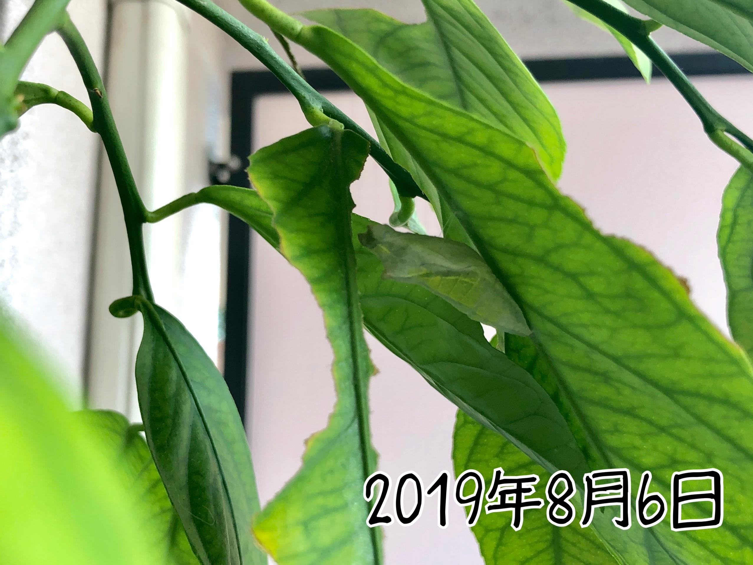写真 2019-08-06 10 18 15