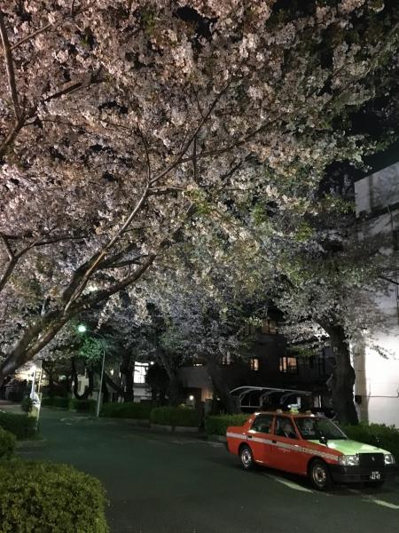IMG_2067タクシー葉桜