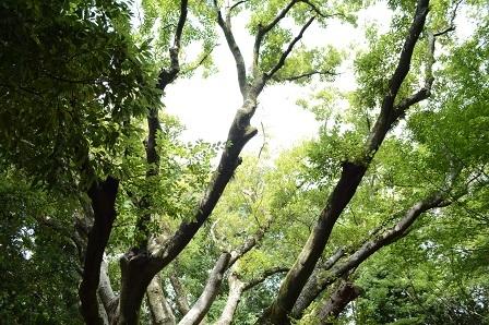 柿田川公園1