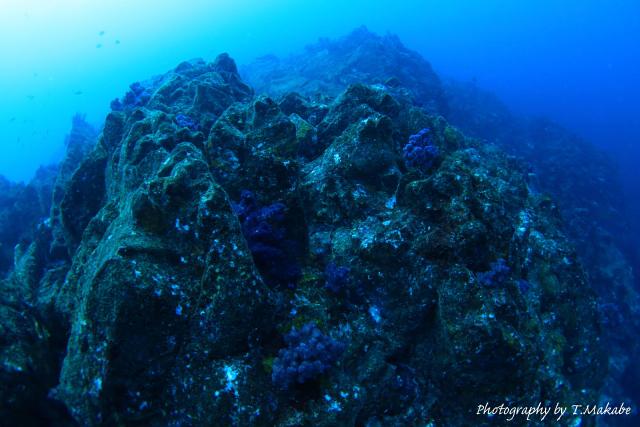 04-1◇伊豆海洋公園の2番の根