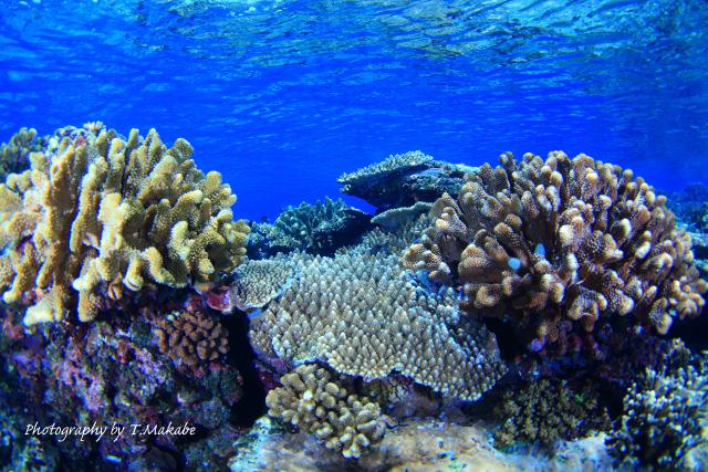 02-1★慶良間諸島奧武島のサンゴ
