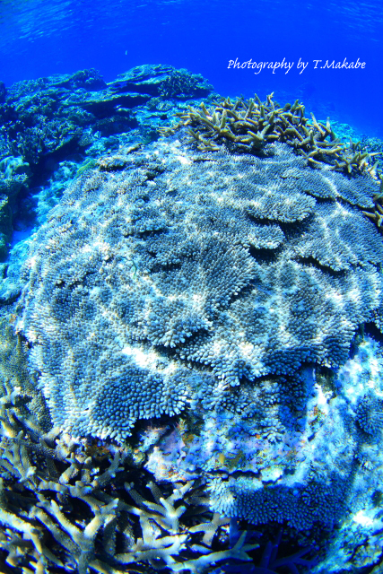 03-1★慶良間諸島奧武島のサンゴ