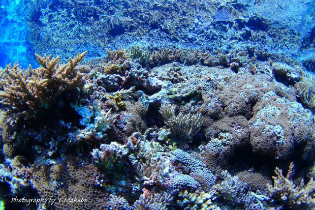 04-1★慶良間諸島奧武島の珊瑚