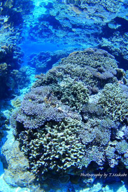 04-2★慶良間諸島奧武島のサンゴ