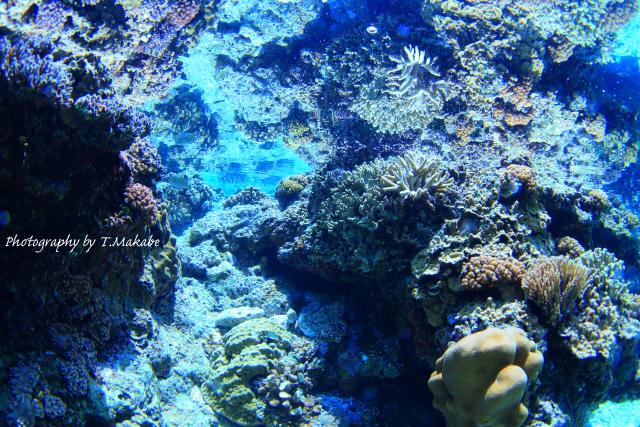 05-1★慶良間諸島奧武島の珊瑚