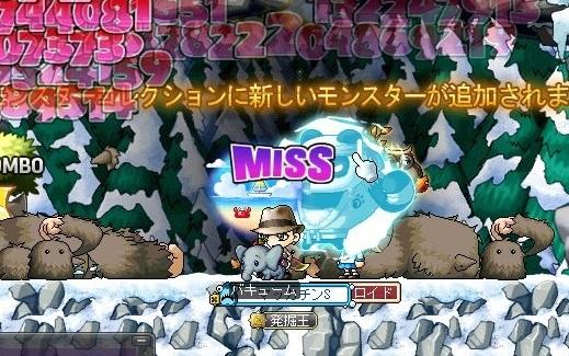 Maple_18344a.jpg