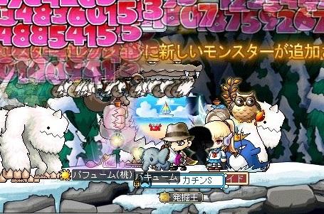 Maple_18436a.jpg