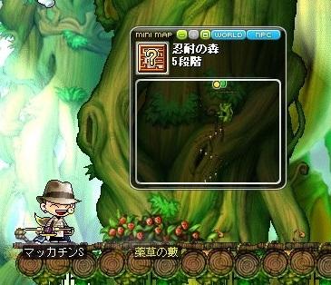 Maple_18441a.jpg