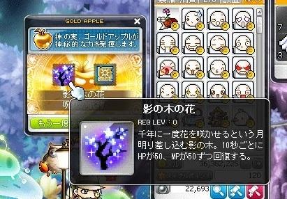Maple_18727a.jpg