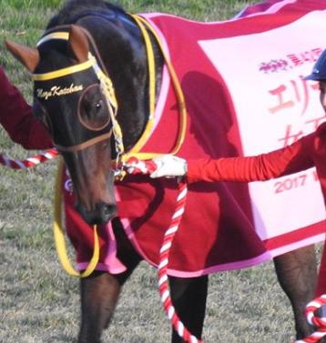 20181107manbaken-horse