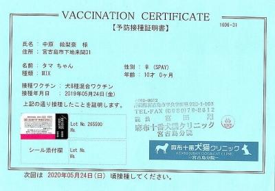 タマ予防接種証明書19年5月