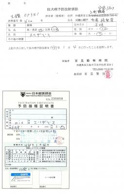 エリザベス狂犬病予防接種190104