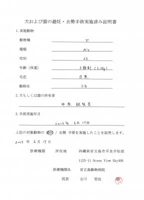 うる避妊手術190617