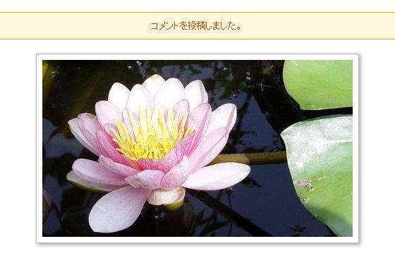 IMG190526-06.jpg