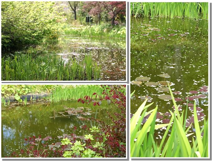 11水の庭