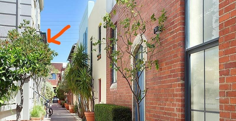柑橘系の木