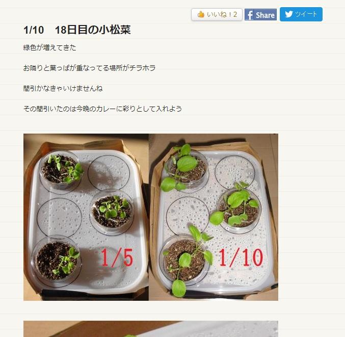 PN小松菜