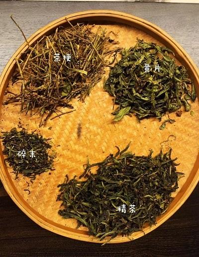 岩茶選別-1