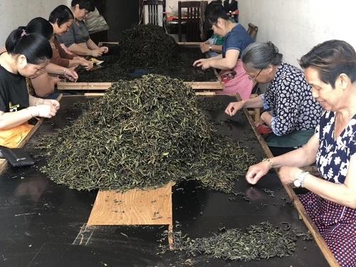 2019年岩茶選別1