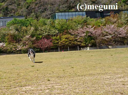 2019-4-17sumaho1.jpg