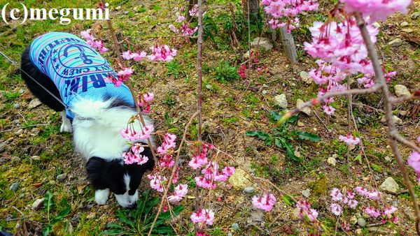2019-4-6sumaho-mugi5.jpg