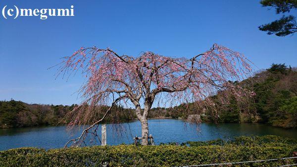 2019-4-9sumaho-mugi1.jpg