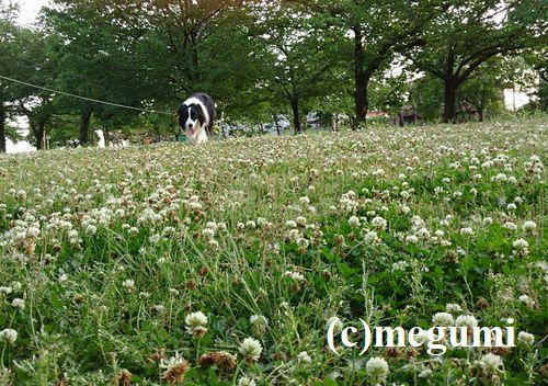 2019-5-29sumaho-mugi2.jpg