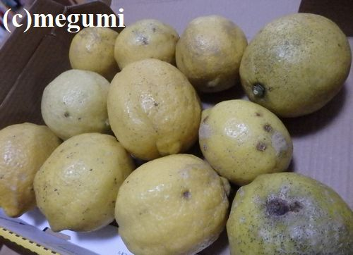 ehime-lemon.jpg