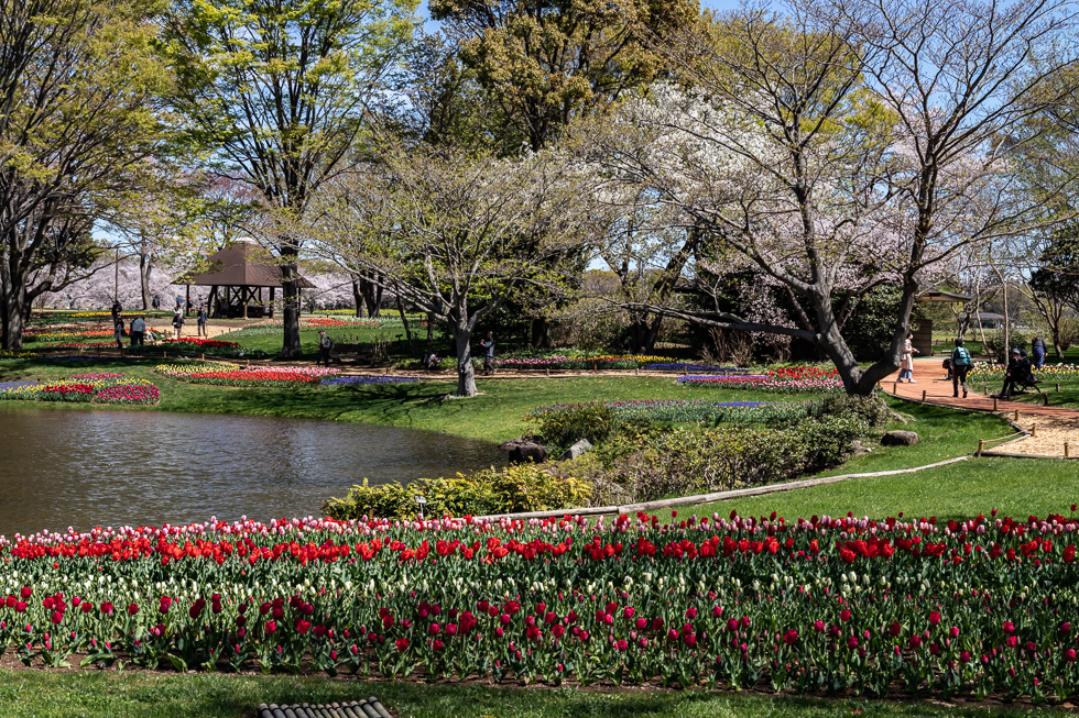 190411昭和自然公園980-5698