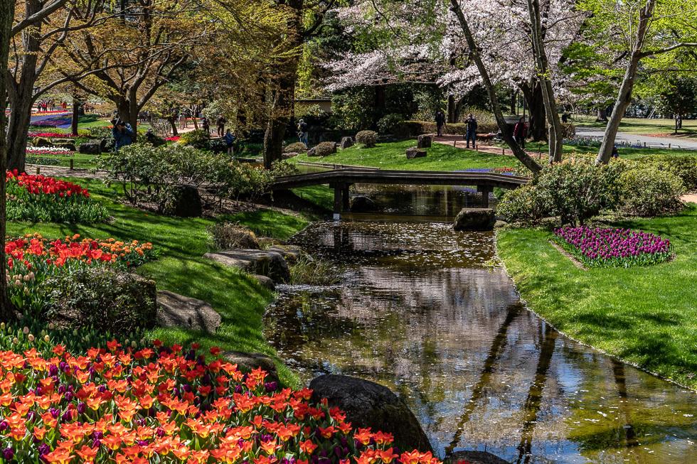 190411昭和自然公園980-5812