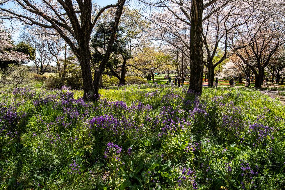 190411昭和自然公園980-5851